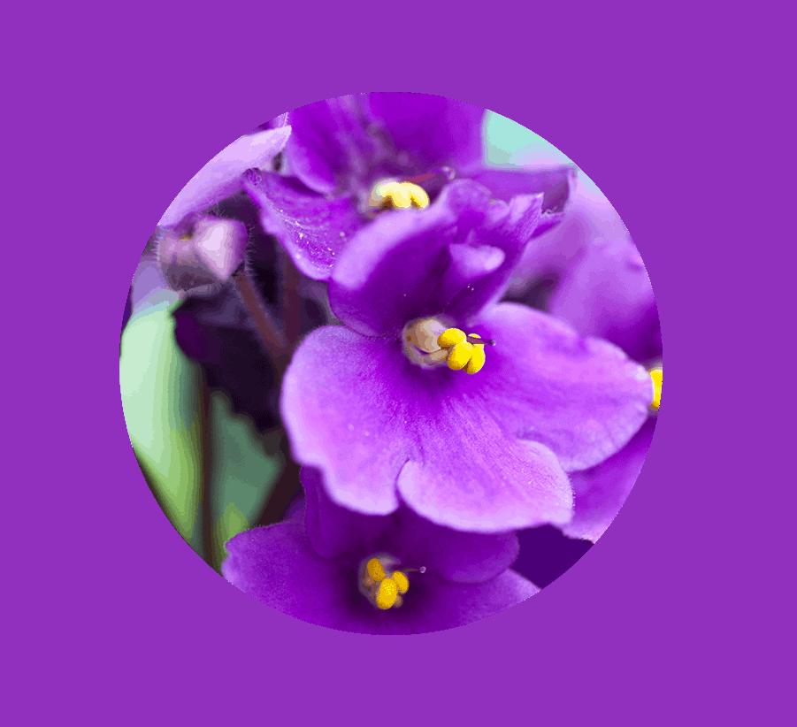 Birth Flowers And Their Meanings Kloeckner Preferred Flowers